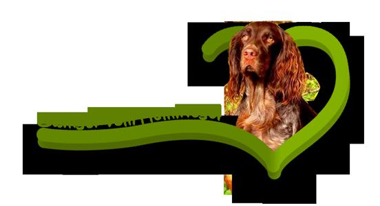 Zwinger vom Helmriegel