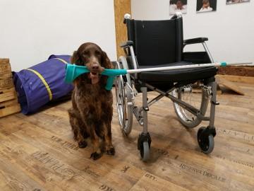 Giulina de Passemarais | Therapiehunde-Team-Eignungsprüfung